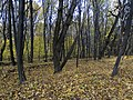 Украина, Киев - Голосеевский лес 68.jpg
