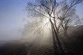 Янівський став туман.jpg