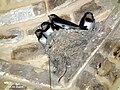 جوجه پرستوها بر سقف بازار وکیل شیراز - panoramio.jpg