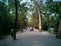 周公庙里的林荫道 - panoramio.jpg