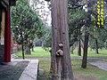 孔庙内 - panoramio (2).jpg
