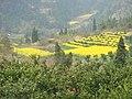 我的家乡 - panoramio.jpg