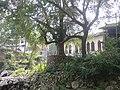 林垟庙后基督教堂边的古树木 - panoramio.jpg