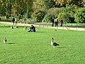 鴨かも・・・(St.James Park) - panoramio.jpg
