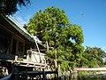 0266jfRiverside Districts Santo Rosario San Pedro Dawe Bulac Macabebe Pampanga villagesfvf 02.JPG