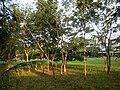 0343jfSabang Halls College Church Fields San Rafael Bulacanfvf 21.JPG