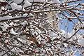 13-02-09 Nemo Snowstorm (Unedited) (78) (8466146585).jpg