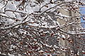 13-02-09 Nemo Snowstorm (Unedited) (83) (8466149585).jpg