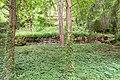 180509-2 aufgelassene Weinbergterrassen.jpg