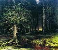 1880. Девственный лес.jpg