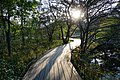 191102 Hakone Botanical Garden of Wetlands Hakone Japan06.JPG
