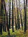 20050424048DR Schönfeld Schloßpark.jpg