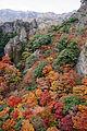 201211Kankakei Shodoshima Kagawa pref Japan13s3.jpg