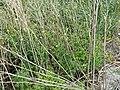 2015.09.05 12.30.28 DSC00304 - Flickr - andrey zharkikh.jpg