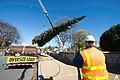 2015 Capitol Christmas Tree Arrival (22823640164).jpg