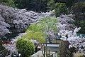 20160403 Himeji-Castle 3356 (26758499091).jpg