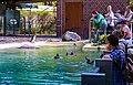 2018 04 ZooEberswalde Humboldt-Pinguine IMG 1172.JPG