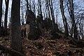 21-248-2002 Анталовецькі скелі, Ужгородське лісництво.JPG