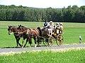 21te Rammenauer Schlossrundfahrt der Pferdegespanne (010).jpg