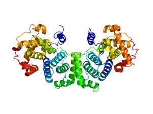 Cyclin B - Image: 2B9R