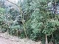 2 Chome Tsukimichō, Tajimi-shi, Gifu-ken 507-0043, Japan - panoramio.jpg