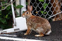 54 rabbit fence.JPG