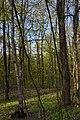 68-206-5013 лісовий заказник Балки.jpg