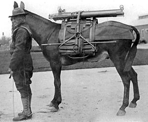 Lesley J. McNair - 1921 photo of U.S. soldier and pack animal carrying components of a mountain howitzer.  McNair designed and experimented with pack saddles and other mountain artillery equipment early in his career.