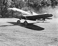 7th Fighter Squadron - P-40 Warhawk.jpg