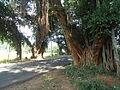 A Road near Kondakarla 01.JPG