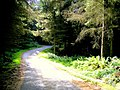 A Road through the Forest - geograph.org.uk - 902189.jpg