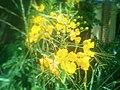 A beautiful flower in Botswana.jpg