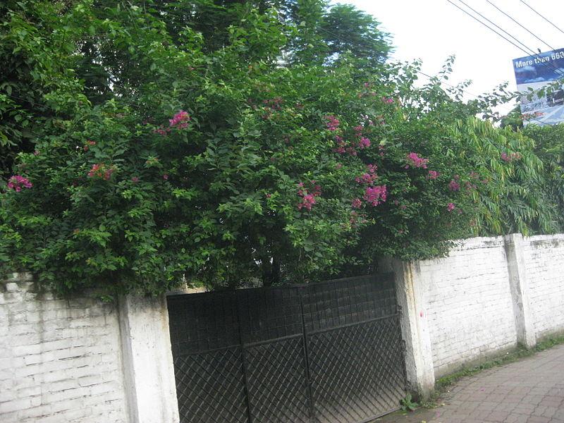 File:A entrance gate of a house in Dhaka.JPG