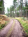 A forest track, Birsemore - geograph.org.uk - 964169.jpg