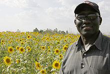 A man standing in front of a field of sunflowers