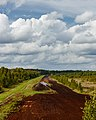 A view of Seda peat bog from observation tower.jpg