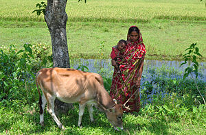 A typical Bangladesh village woman taking care family members and animal.