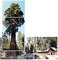 Advantage of nature (Sep. 8, 2007) - panoramio.jpg