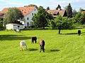 Affoltern - 'Gestüt' Unteraffoltern - Zehntenhausstrasse 2012-05-13 17-47-17 (P7000).JPG