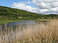 Afon Conwy with reeds - geograph.org.uk - 1295662.jpg