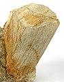 Albite-Muscovite-Spodumene-rw07b.jpg