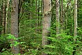 Algerine Swamp Natural Area (9) (14699206651).jpg