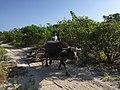 Alibijaban Island, San Andres, Quezon Province, Philippines (1).jpg
