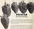 Allen's 1956 book of berries (1956) (17951554811).jpg