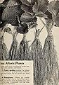 Allen's book of berries for 1938 (1938) (17328656434).jpg
