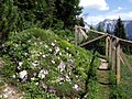 Alpenpflanzengarten mit Zaun und Weg.jpg