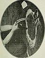 Alphabet du piégeage (1911) (14782934225).jpg