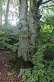 Alter Baum - panoramio.jpg