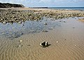 An outgoing tide - geograph.org.uk - 1478939.jpg