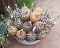Ananas in Kananga City DRC for sale photo by Ch. Naeem Ahmad bajwa.jpg